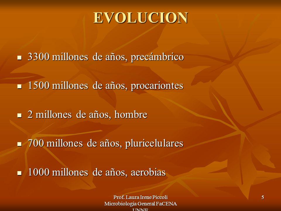 Prof. Laura Irene Piccoli Microbiología General FaCENA UNNE 5 EVOLUCION 3300 millones de años, precámbrico 3300 millones de años, precámbrico 1500 mil