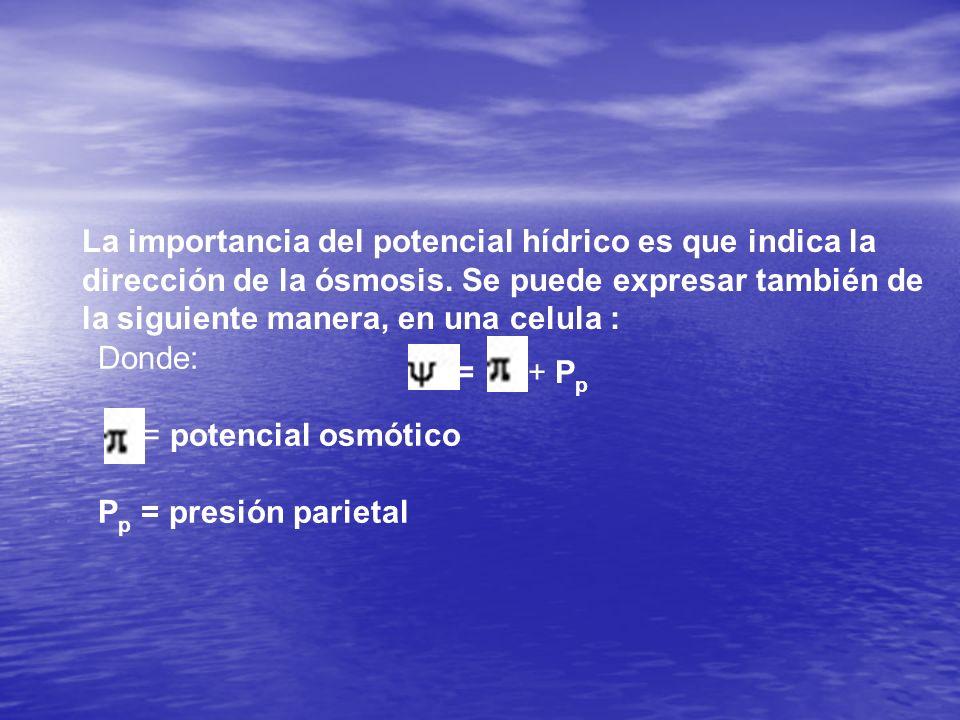 La importancia del potencial hídrico es que indica la dirección de la ósmosis. Se puede expresar también de la siguiente manera, en una celula : = + P