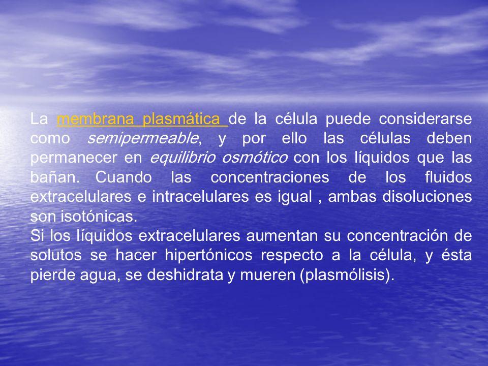 La membrana plasmática de la célula puede considerarse como semipermeable, y por ello las células deben permanecer en equilibrio osmótico con los líqu