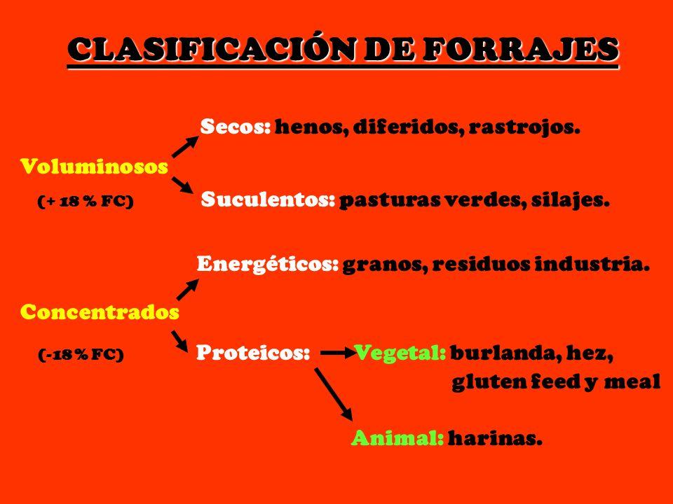 CLASIFICACIÓN DE FORRAJES Secos: henos, diferidos, rastrojos. Voluminosos (+ 18 % FC) Suculentos: pasturas verdes, silajes. Energéticos: granos, resid