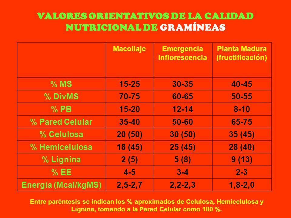 VALORES ORIENTATIVOS DE LA CALIDAD NUTRICIONAL DE GRAMÍNEAS MacollajeEmergencia Inflorescencia Planta Madura (fructificación) % MS15-2530-3540-45 % Di