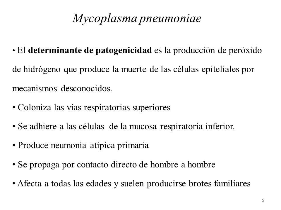 5 Mycoplasma pneumoniae El determinante de patogenicidad es la producción de peróxido de hidrógeno que produce la muerte de las células epiteliales po