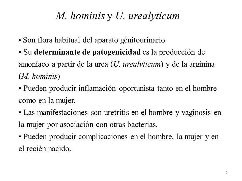 7 M. hominis y U. urealyticum Son flora habitual del aparato génitourinario. Su determinante de patogenicidad es la producción de amoníaco a partir de