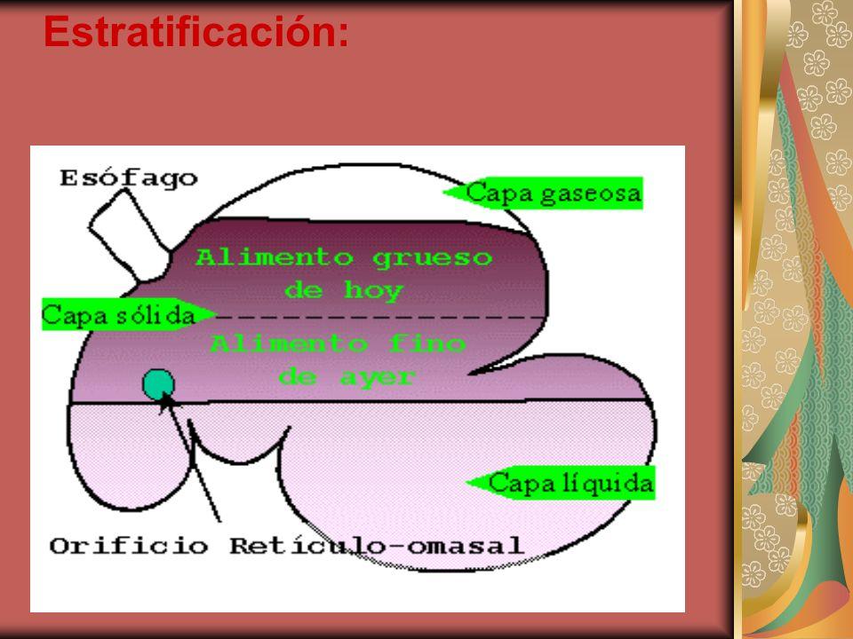 Estratificación: