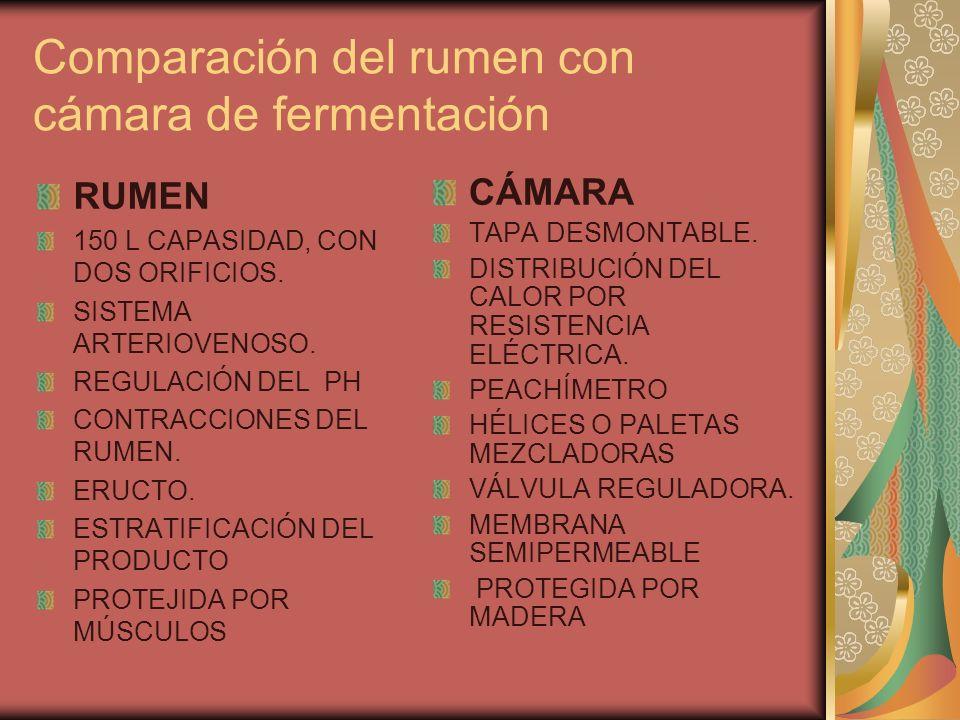 Comparación del rumen con cámara de fermentación RUMEN 150 L CAPASIDAD, CON DOS ORIFICIOS. SISTEMA ARTERIOVENOSO. REGULACIÓN DEL PH CONTRACCIONES DEL