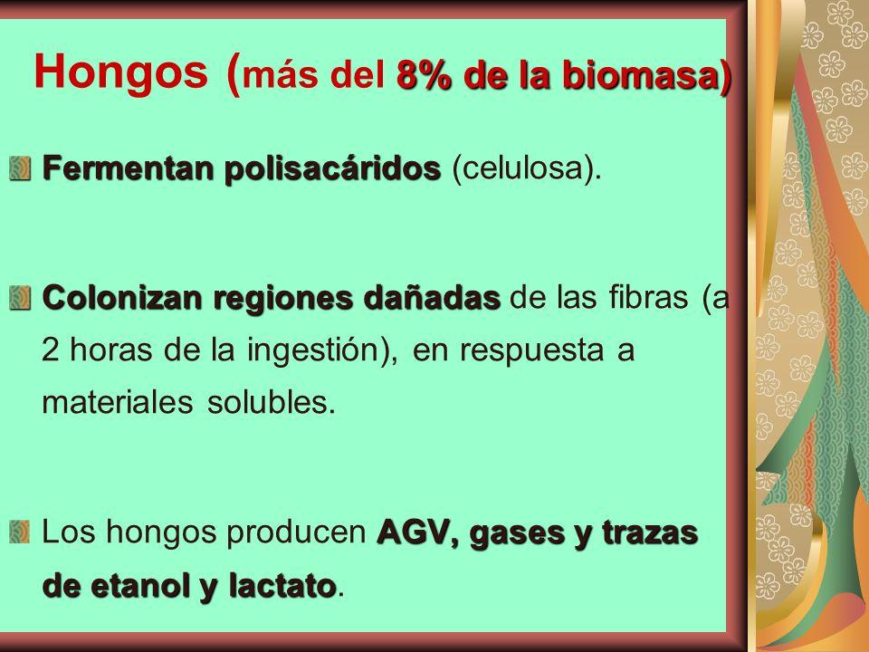 8% de la biomasa) Hongos ( más del 8% de la biomasa) Fermentan polisacáridos Fermentan polisacáridos (celulosa). Colonizan regiones dañadas Colonizan