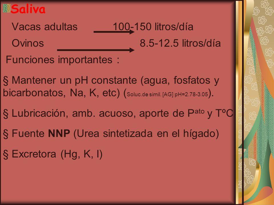 8% de la biomasa) Hongos ( más del 8% de la biomasa) Fermentan polisacáridos Fermentan polisacáridos (celulosa).