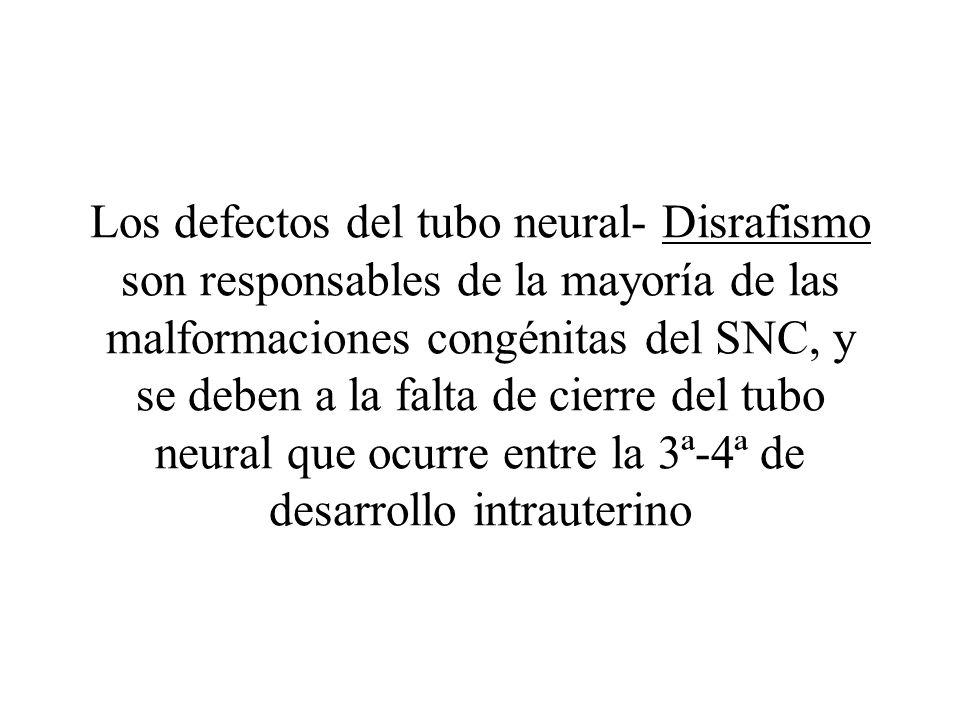 Los defectos del tubo neural- Disrafismo son responsables de la mayoría de las malformaciones congénitas del SNC, y se deben a la falta de cierre del