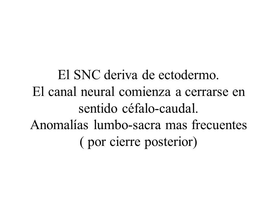 El SNC deriva de ectodermo. El canal neural comienza a cerrarse en sentido céfalo-caudal. Anomalías lumbo-sacra mas frecuentes ( por cierre posterior)