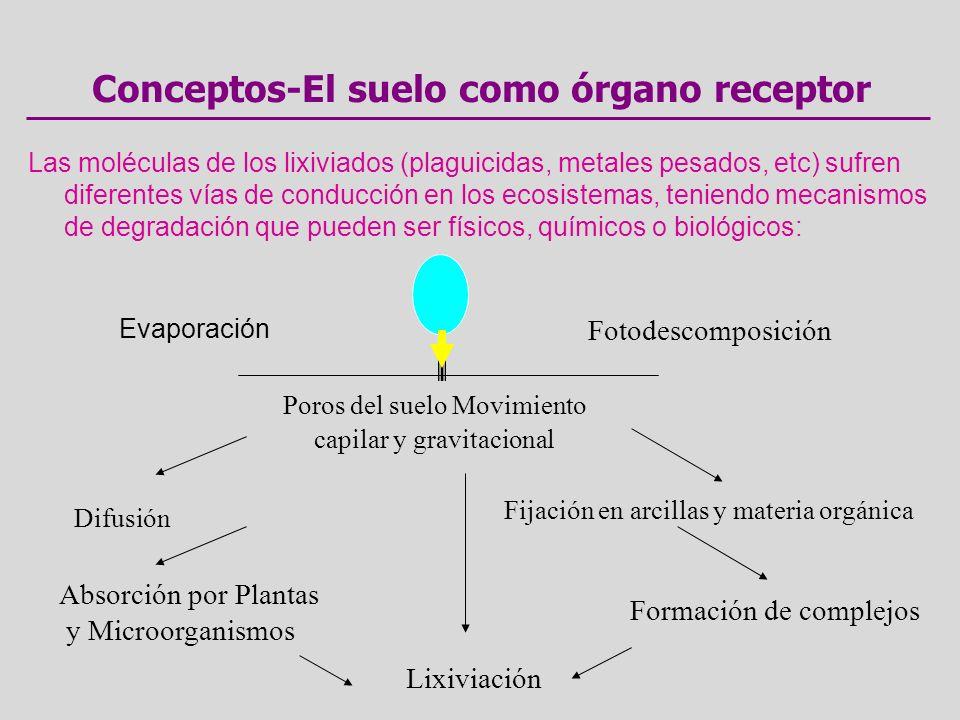 Conceptos-El suelo como órgano receptor Las moléculas de los lixiviados (plaguicidas, metales pesados, etc) sufren diferentes vías de conducción en los ecosistemas, teniendo mecanismos de degradación que pueden ser físicos, químicos o biológicos: Evaporación Fotodescomposición Poros del suelo Movimiento capilar y gravitacional Difusión Fijación en arcillas y materia orgánica Absorción por Plantas y Microorganismos Formación de complejos Lixiviación