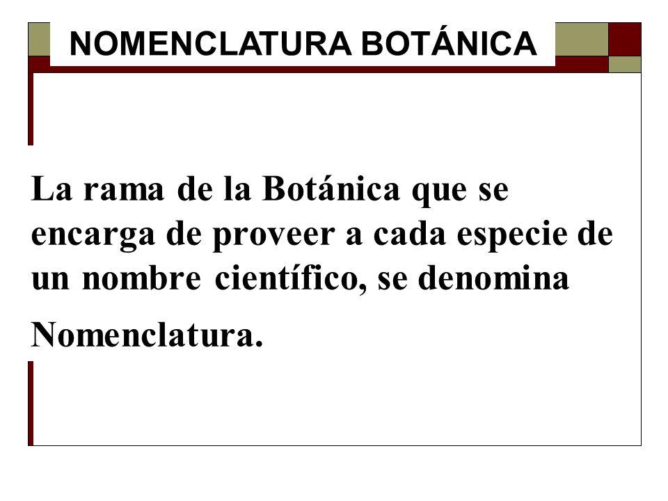 La rama de la Botánica que se encarga de proveer a cada especie de un nombre científico, se denomina Nomenclatura. NOMENCLATURA BOTÁNICA