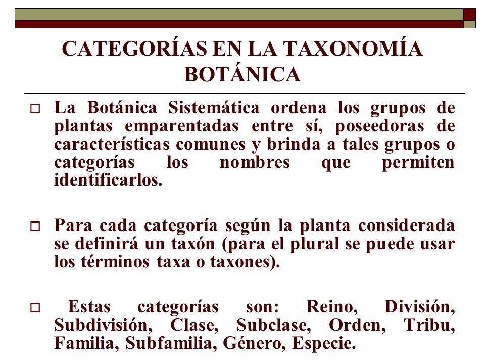CATEGORÍAS EN LA TAXONOMÍA BOTÁNICA La Botánica Sistemática ordena los grupos de plantas emparentadas entre sí, poseedoras de características comunes