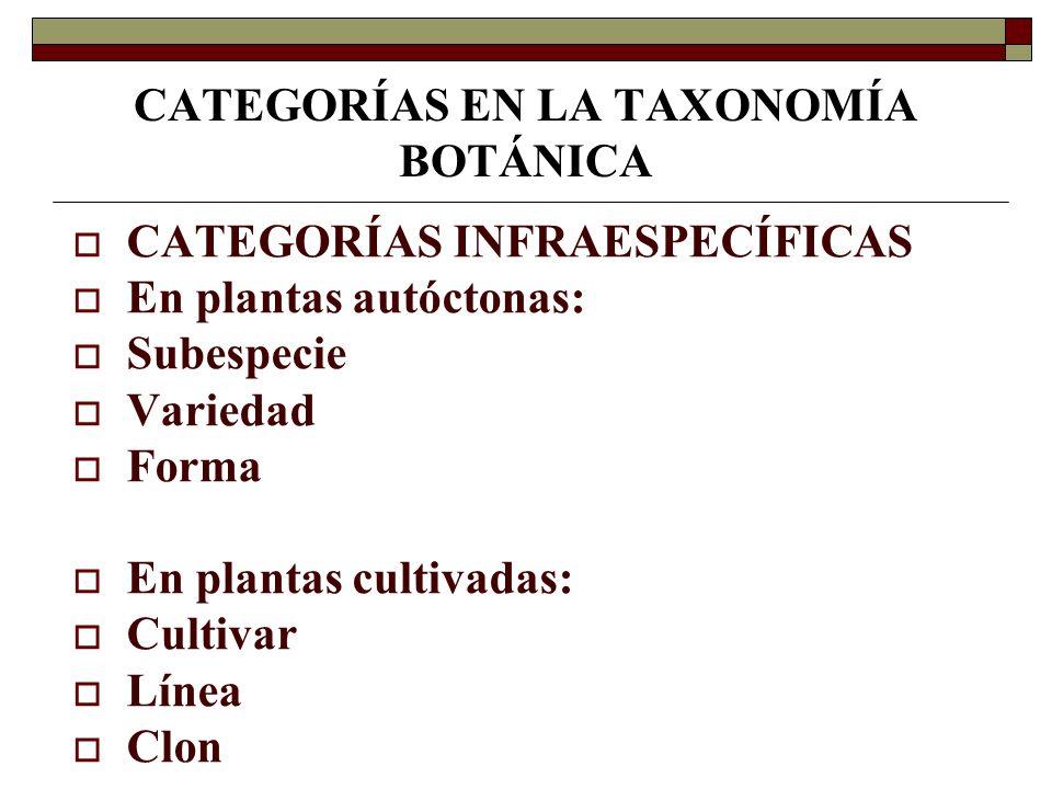 CATEGORÍAS EN LA TAXONOMÍA BOTÁNICA CATEGORÍAS INFRAESPECÍFICAS En plantas autóctonas: Subespecie Variedad Forma En plantas cultivadas: Cultivar Línea