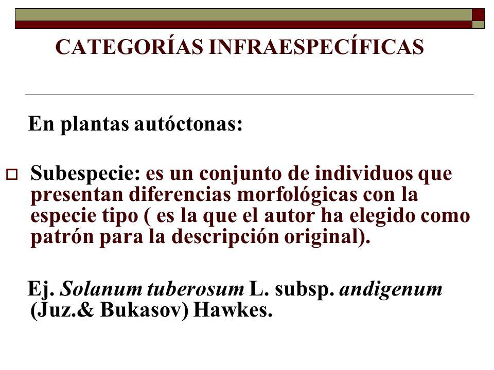 CATEGORÍAS INFRAESPECÍFICAS En plantas autóctonas: Subespecie: es un conjunto de individuos que presentan diferencias morfológicas con la especie tipo