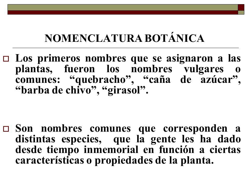 NOMENCLATURA BOTÁNICA El nominar a las plantas sólo por su nombre común, ocasionaba numerosos inconvenientes ya que éstos no eran universales y sólo eran válidos para una lengua y una región determinada.