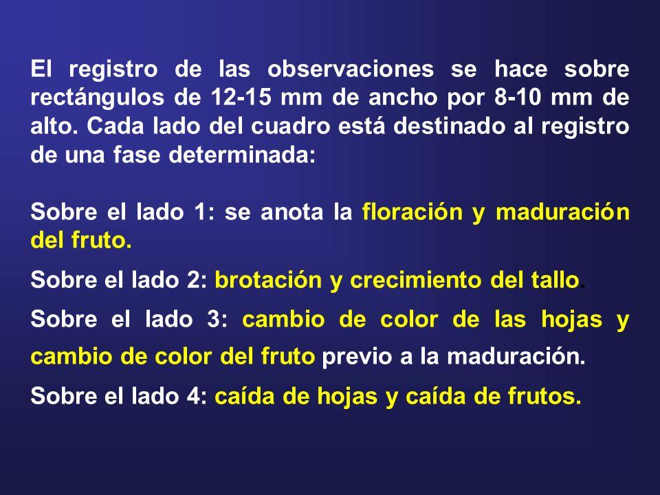 El registro de las observaciones se hace sobre rectángulos de 12-15 mm de ancho por 8-10 mm de alto. Cada lado del cuadro está destinado al registro d