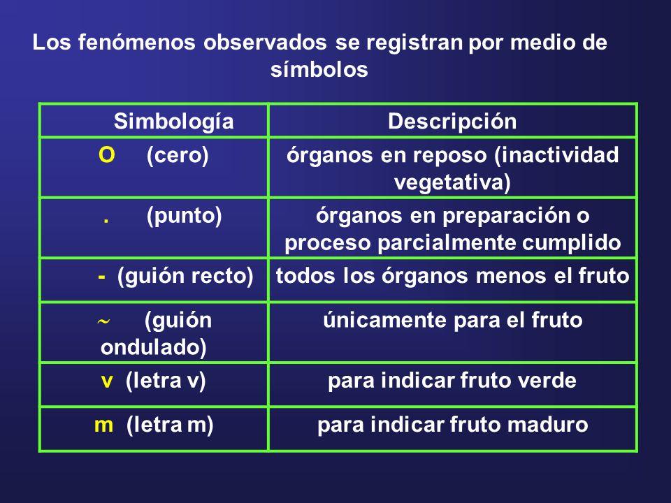 SimbologíaDescripción O (cero)órganos en reposo (inactividad vegetativa). (punto)órganos en preparación o proceso parcialmente cumplido - (guión recto