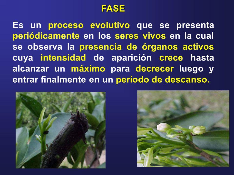 FASE Es un proceso evolutivo que se presenta periódicamente en los seres vivos en la cual se observa la presencia de órganos activos cuya intensidad d