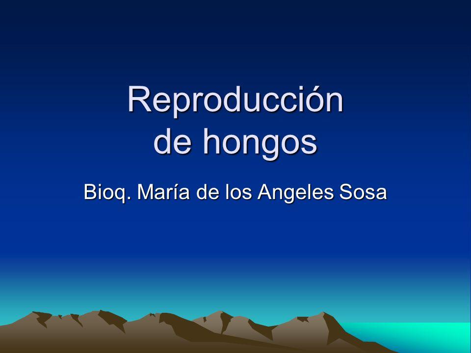 Reproducción de hongos Bioq. María de los Angeles Sosa