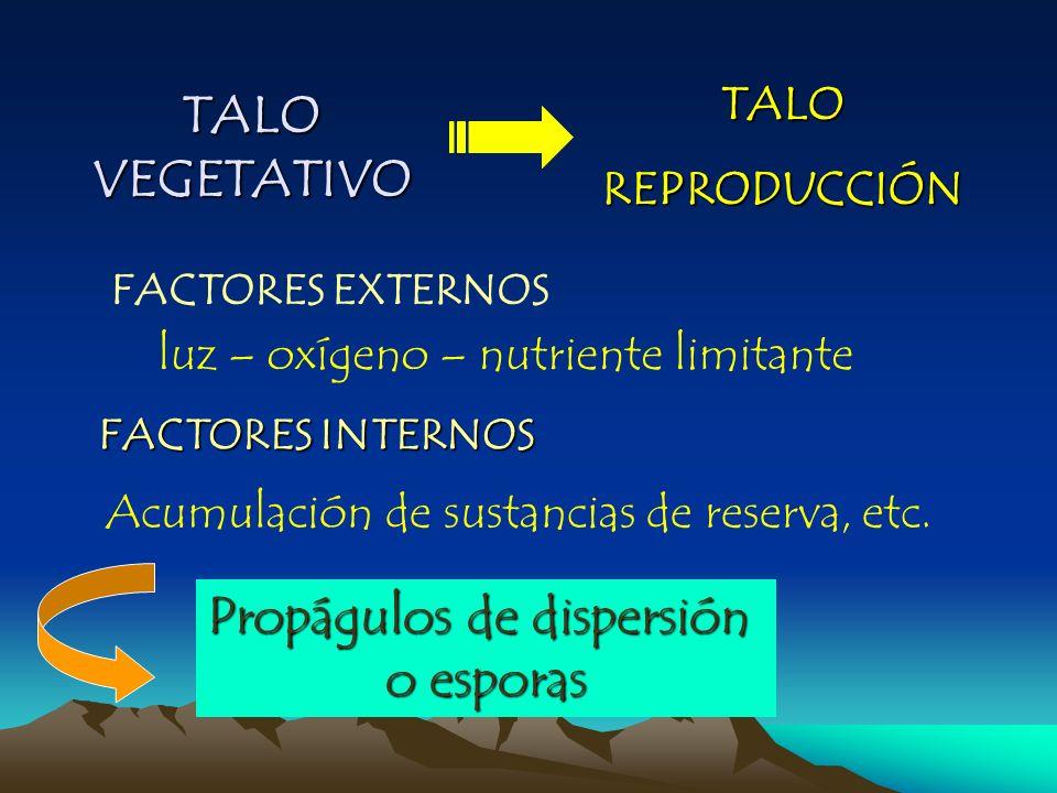 TALO VEGETATIVO FACTORES EXTERNOS TALOREPRODUCCIÓN luz – oxígeno – nutriente limitante FACTORES INTERNOS Acumulación de sustancias de reserva, etc. Pr