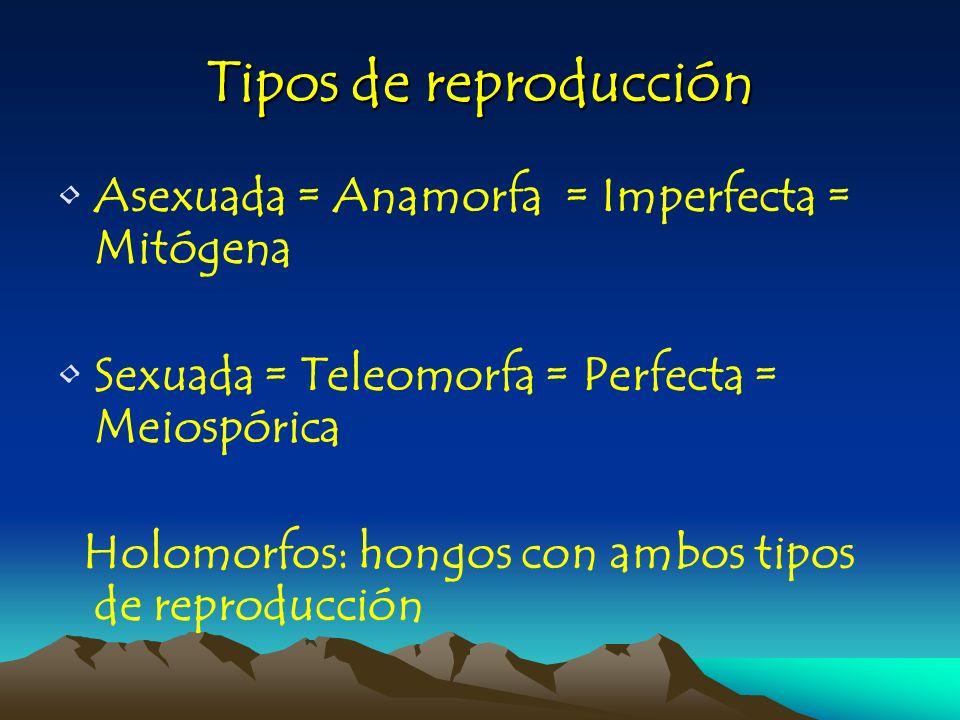 Tipos de reproducción Asexuada = Anamorfa = Imperfecta = Mitógena Sexuada = Teleomorfa = Perfecta = Meiospórica Holomorfos: hongos con ambos tipos de