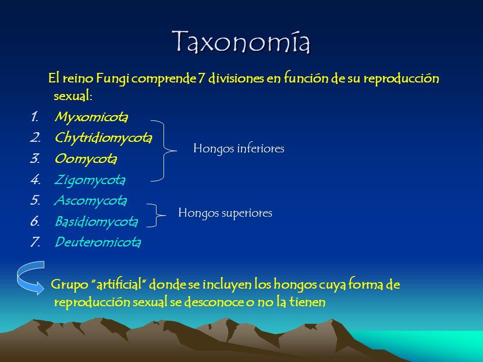 El reino Fungi comprende 7 divisiones en función de su reproducción sexual: 1.Myxomicota 2.Chytridiomycota 3.Oomycota 4.Zigomycota 5.Ascomycota 6.Basi