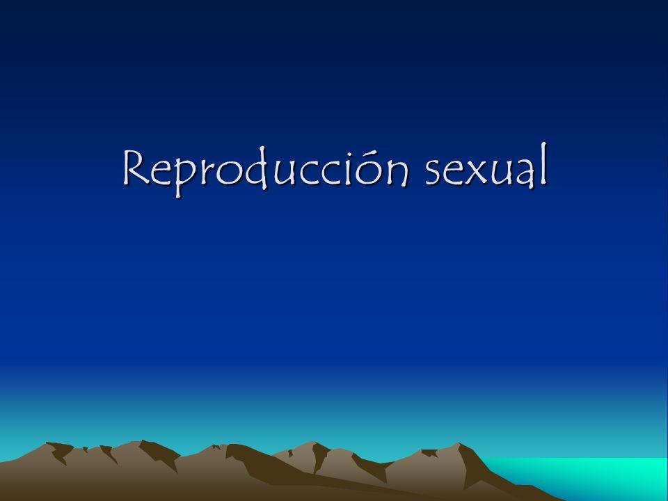 (+/-) Producción de órganos sexuados y gametos (+/-) Fases de la Reproducción Sexual Plasmogamia Plasmogamia Fusión de protoplasma Fase haploide (n) Cariogamia Fusión de núcleos Fase diploide (2n) Meiosis reduccional 2 o 2n esporos sexuados Fase haploide (n)