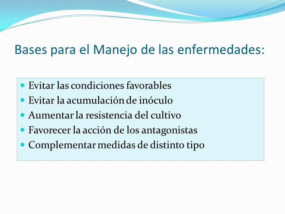 Bases para el Manejo de las enfermedades: Evitar las condiciones favorables Evitar la acumulación de inóculo Aumentar la resistencia del cultivo Favor