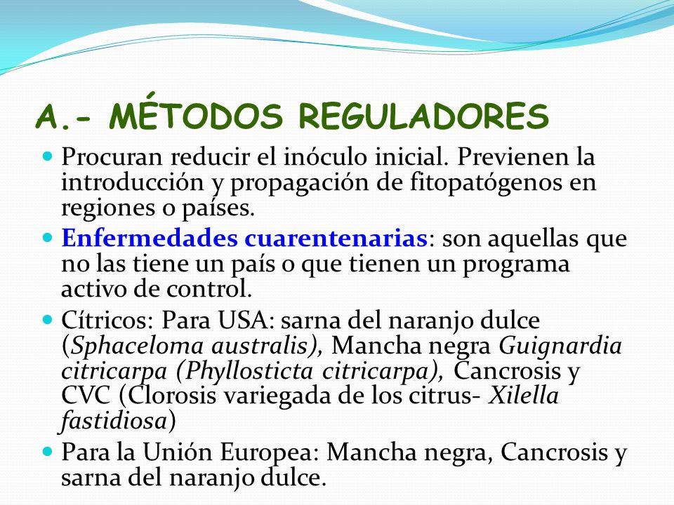 A.- MÉTODOS REGULADORES Procuran reducir el inóculo inicial. Previenen la introducción y propagación de fitopatógenos en regiones o países. Enfermedad