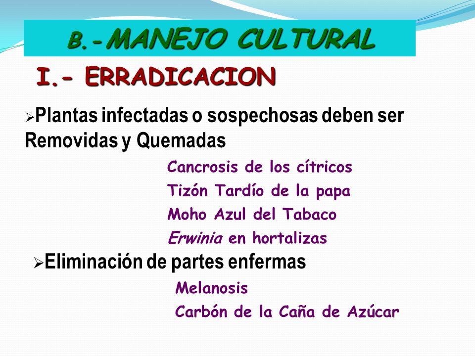 B.- MANEJO CULTURAL I.- ERRADICACION Plantas infectadas o sospechosas deben ser Removidas y Quemadas Cancrosis de los cítricos Tizón Tardío de la papa