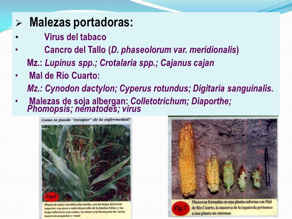 Malezas portadoras: Virus del tabaco Cancro del Tallo ( D. phaseolorum var. meridionalis ) Mz.: Lupinus spp.; Crotalaria spp.; Cajanus cajan Mal de Rí