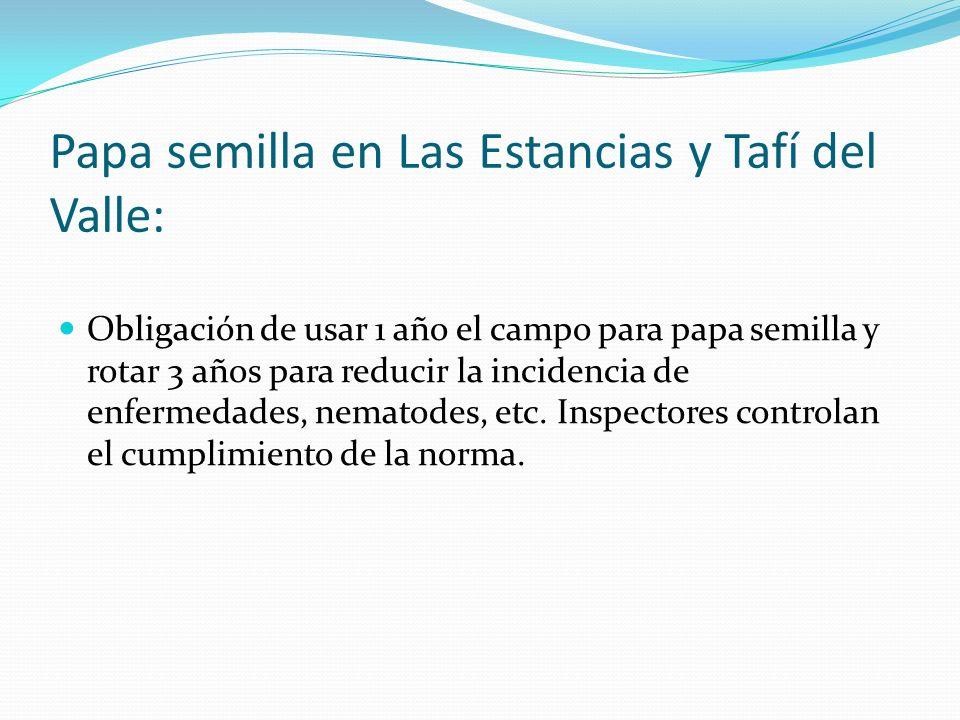 Papa semilla en Las Estancias y Tafí del Valle: Obligación de usar 1 año el campo para papa semilla y rotar 3 años para reducir la incidencia de enfer