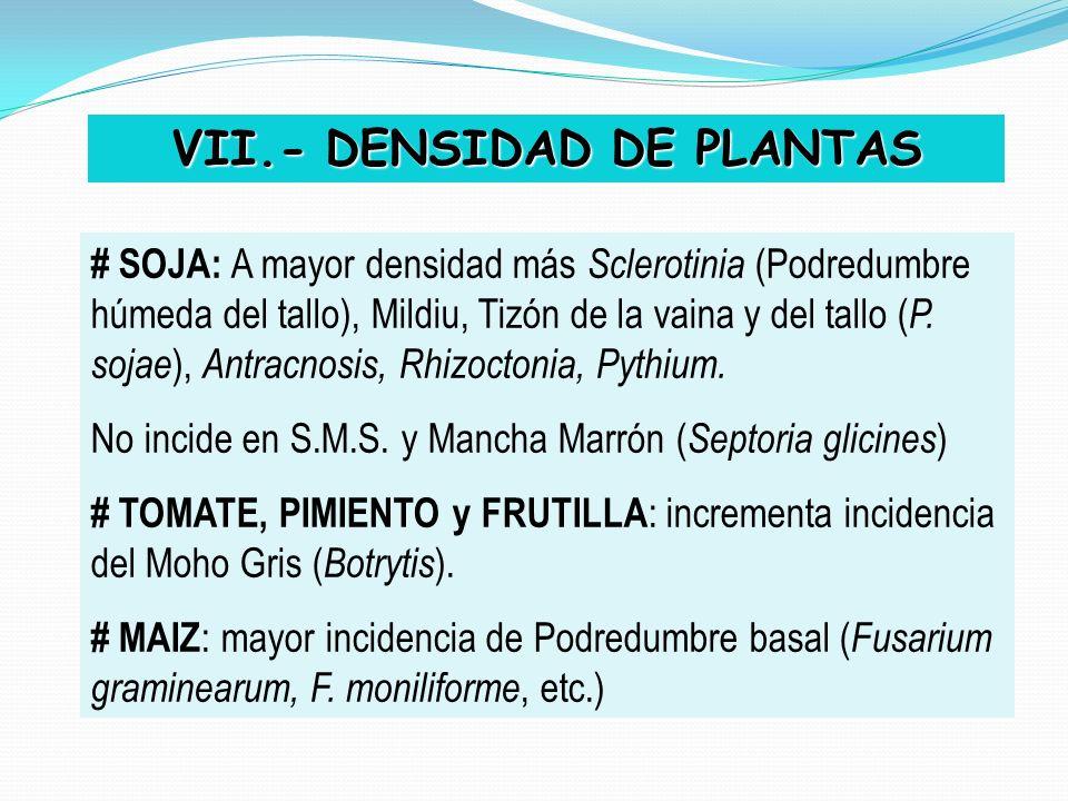 VII.- DENSIDAD DE PLANTAS # SOJA: A mayor densidad más Sclerotinia (Podredumbre húmeda del tallo), Mildiu, Tizón de la vaina y del tallo ( P. sojae ),