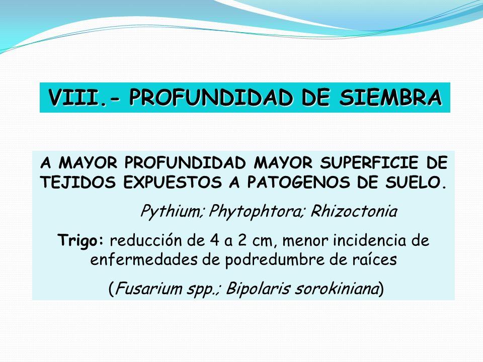 VIII.- PROFUNDIDAD DE SIEMBRA A MAYOR PROFUNDIDAD MAYOR SUPERFICIE DE TEJIDOS EXPUESTOS A PATOGENOS DE SUELO. Pythium; Phytophtora; Rhizoctonia Trigo: