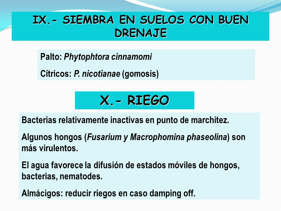 IX.- SIEMBRA EN SUELOS CON BUEN DRENAJE Palto: Phytophtora cinnamomi Cítricos: P. nicotianae (gomosis) X.- RIEGO Bacterias relativamente inactivas en