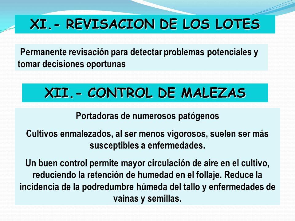 XI.- REVISACION DE LOS LOTES Permanente revisación para detectar problemas potenciales y tomar decisiones oportunas XII.- CONTROL DE MALEZAS Portadora