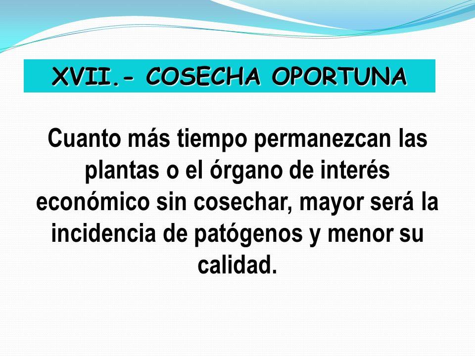 XVII.- COSECHA OPORTUNA Cuanto más tiempo permanezcan las plantas o el órgano de interés económico sin cosechar, mayor será la incidencia de patógenos
