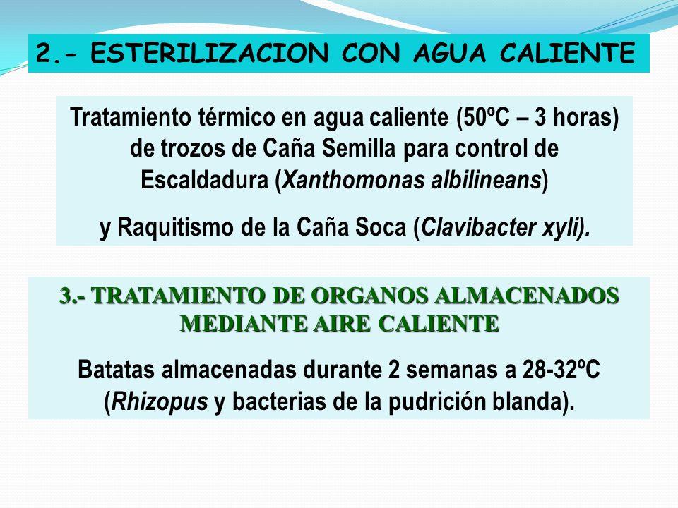 2.- ESTERILIZACION CON AGUA CALIENTE Tratamiento térmico en agua caliente (50ºC – 3 horas) de trozos de Caña Semilla para control de Escaldadura ( Xan