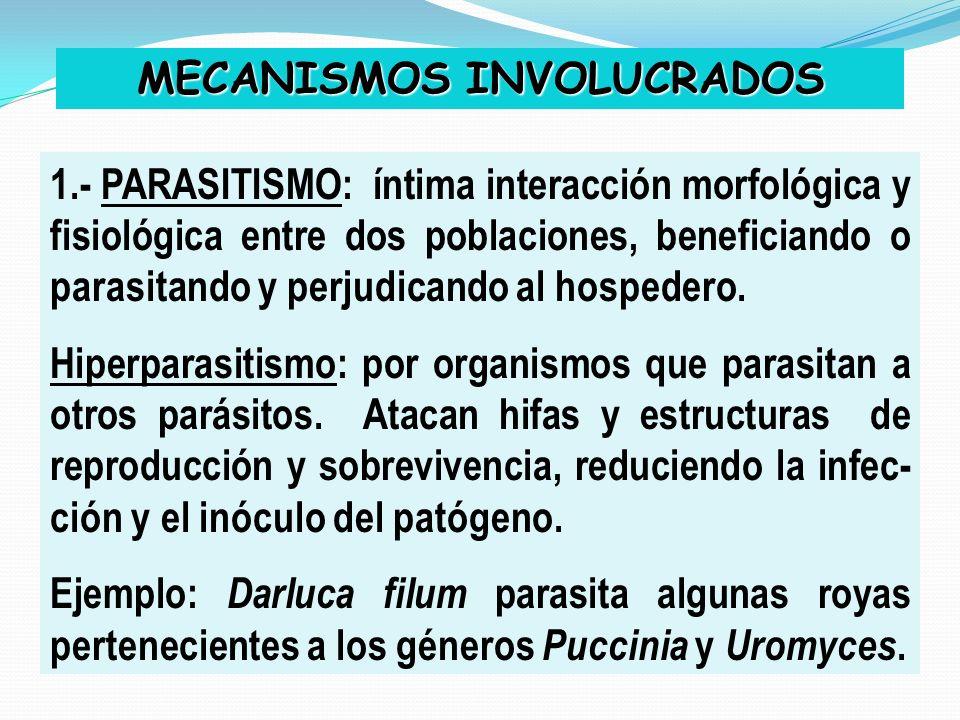 MECANISMOS INVOLUCRADOS 1.- PARASITISMO: íntima interacción morfológica y fisiológica entre dos poblaciones, beneficiando o parasitando y perjudicando