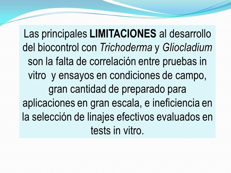 Trichoderma y Gliocladium Las principales LIMITACIONES al desarrollo del biocontrol con Trichoderma y Gliocladium son la falta de correlación entre pr