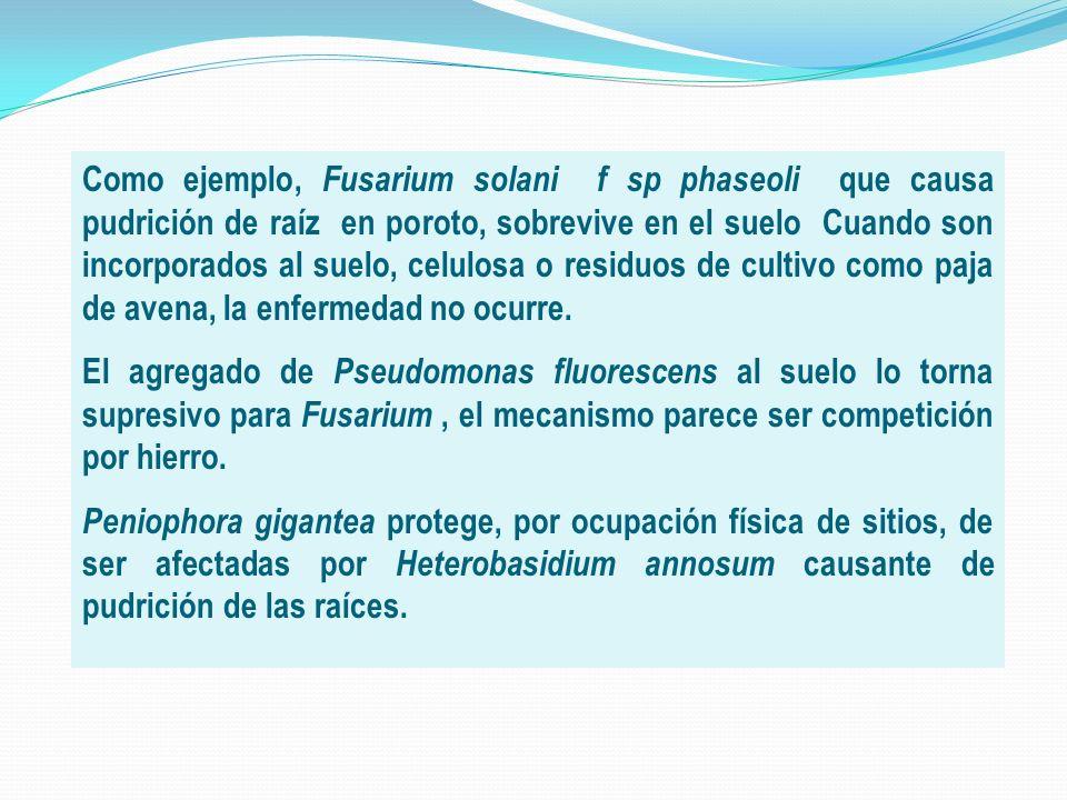 Como ejemplo, Fusarium solani f sp phaseoli que causa pudrición de raíz en poroto, sobrevive en el suelo Cuando son incorporados al suelo, celulosa o