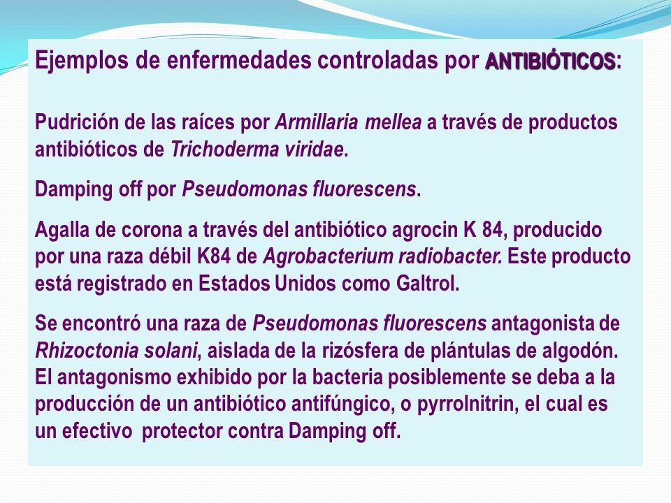 ANTIBIÓTICOS Ejemplos de enfermedades controladas por ANTIBIÓTICOS : Pudrición de las raíces por Armillaria mellea a través de productos antibióticos