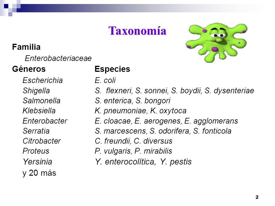 2 Familia Enterobacteriaceae GénerosEspecies Escherichia E. coli ShigellaS. flexneri, S. sonnei, S. boydii, S. dysenteriae SalmonellaS. enterica, S. b