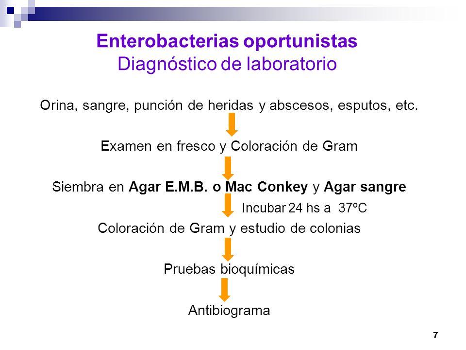 7 Enterobacterias oportunistas Diagnóstico de laboratorio Orina, sangre, punción de heridas y abscesos, esputos, etc. Examen en fresco y Coloración de