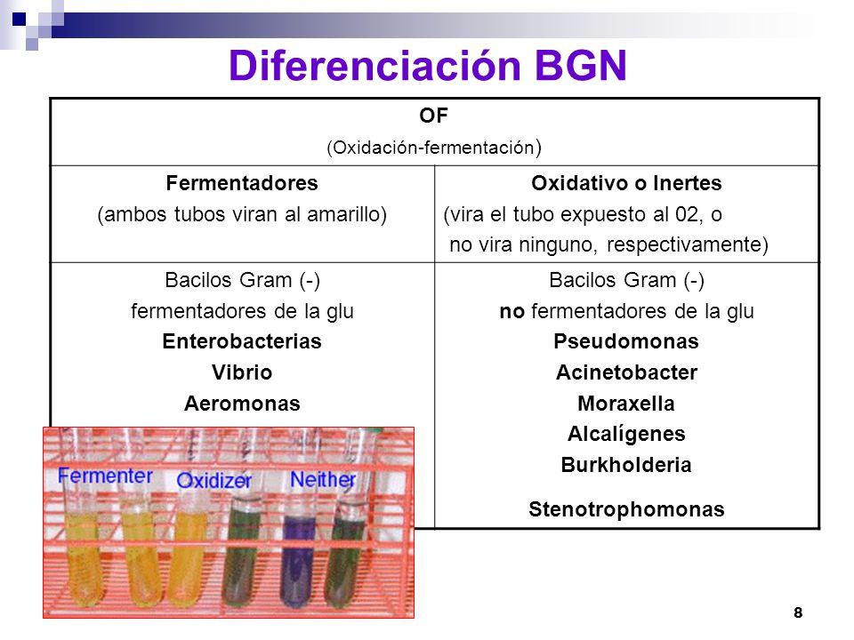 8 Diferenciación BGN OF (Oxidación-fermentación ) Fermentadores (ambos tubos viran al amarillo) Oxidativo o Inertes (vira el tubo expuesto al 02, o no