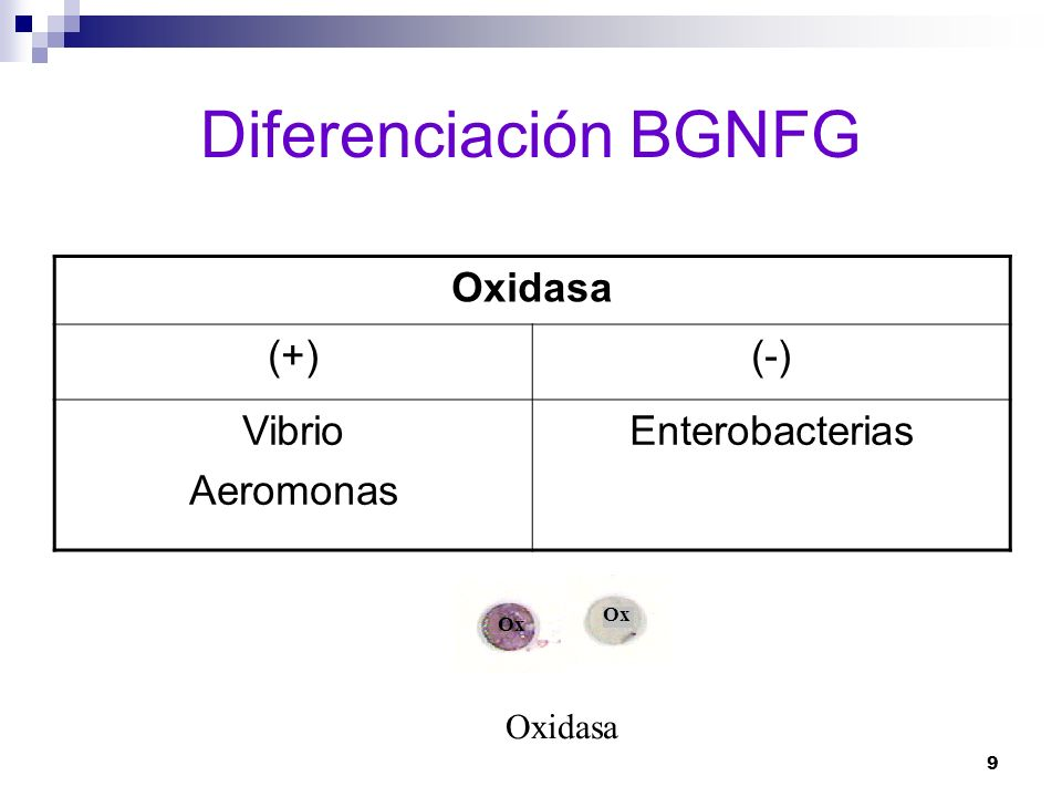 9 Diferenciación BGNFG Oxidasa (+)(-) Vibrio Aeromonas Enterobacterias Ox Oxidasa