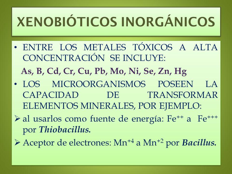 XENOBIÓTICOS INORGÁNICOS ENTRE LOS METALES TÓXICOS A ALTA CONCENTRACIÓN SE INCLUYE: As, B, Cd, Cr, Cu, Pb, Mo, Ni, Se, Zn, Hg LOS MICROORGANISMOS POSE