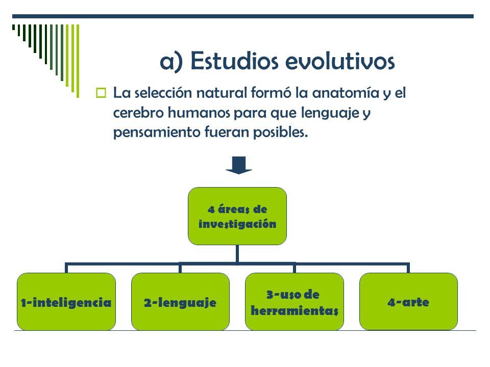 a) Estudios evolutivos La selección natural formó la anatomía y el cerebro humanos para que lenguaje y pensamiento fueran posibles. 4 áreas de investi