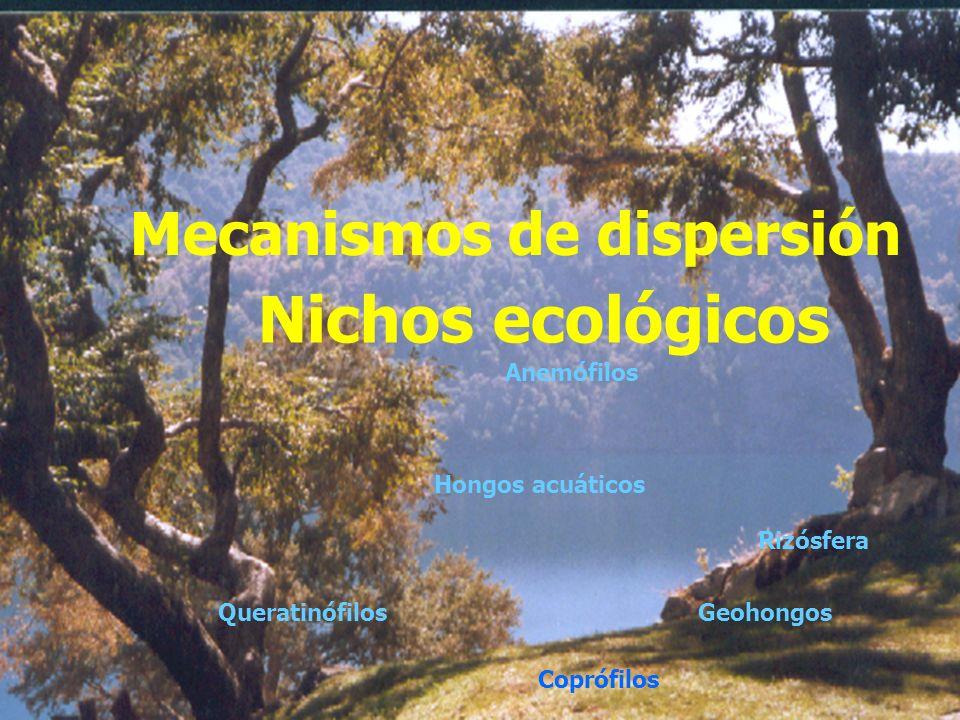 Existen desde hace más de 600.000.000 millones de años Existen desde hace más de 600.000.000 millones de años Capacidad de adaptación Capacidad de ada
