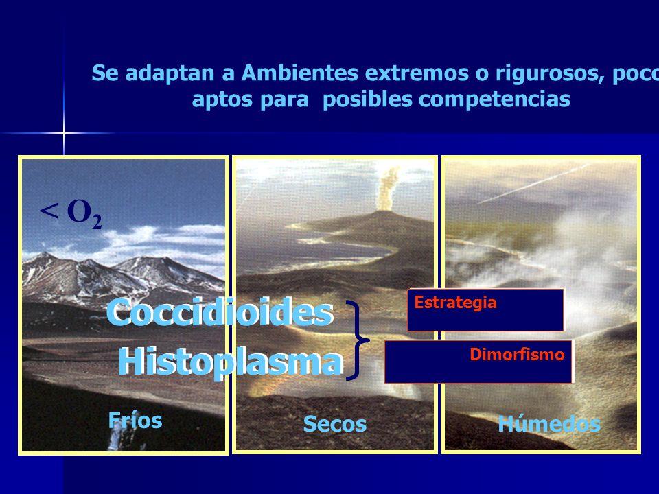 Coccidioides Histoplasma Se adaptan a Ambientes extremos o rigurosos, poco aptos para posibles competencias Estrategia Fríos Secos Húmedos Dimorfismo < O 2